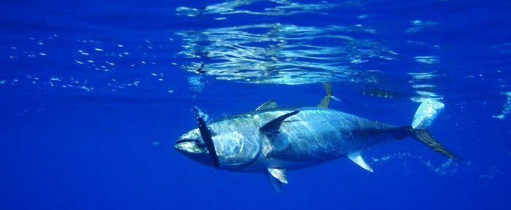 Sobrepesca en el mediterráneo